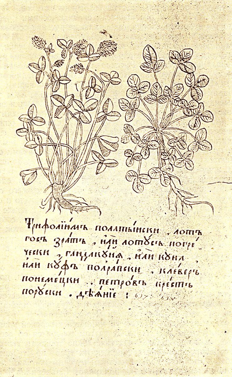 травник лекарственные растения картинки сегодня