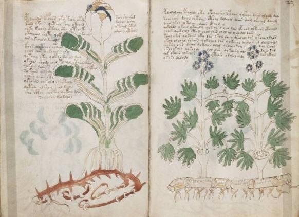 Manuskript-Vojjnicha-663x463