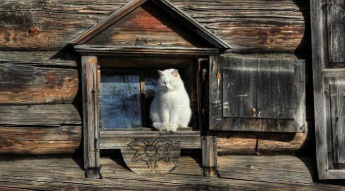 Откуда на Руси взялись кошки