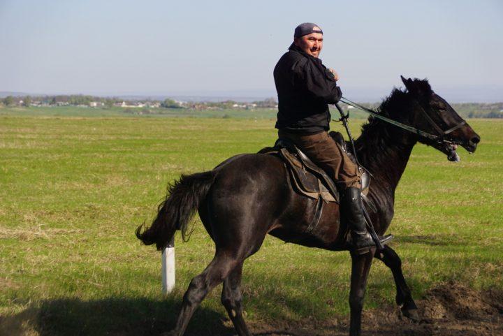 Лошади 5