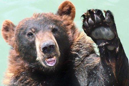 Медвежий батальон