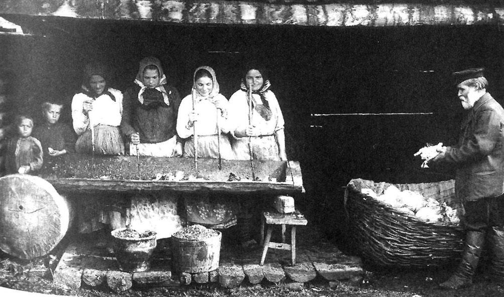 Заготовка капусты на зиму. Южный Урал. 1914